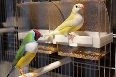 """Выставка """"Птички в рукавичке"""" 29,.."""