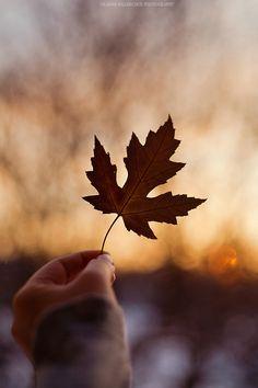 Crisp leaves and golden tones