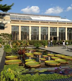 Longwood Gardens, Pierre du Pont, conservatory, greenhouses, arboretums, water-platter, water-lily.