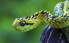 22 Weird Animal Creatures That You've Probably Never Seen Poisonous Animals, Bizarre Animals, Poisonous Snakes, Reptiles, Glaucus Atlanticus, Talking To The Moon, Snake Images, Images Of Snakes, Types Of Snake