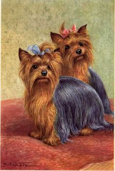 yorkie art | Yorkshire Terrier Vintage Dog art prints, Gifts and Artwork from ...