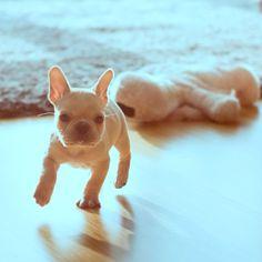 Run!!!!! Zoombies!