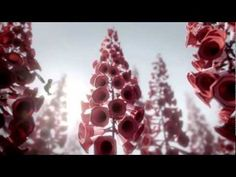 Title	Audi Hummingbird Campaign	Audi Hummingbird Advertiser	Audi Brand	Audi Date of First Broadcast/Publication	2011 / 10 Agency BBH London  Production The Mill