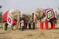 For animal people. Pass it on. Knitting for Abused elephants to protect them during the winter.