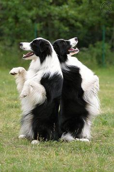 Výcviky :: Naše psí banda
