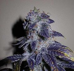 Some of the purp 💜
