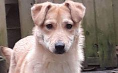 Jack Labrador Retriever, Dogs, Animals, Labrador Retrievers, Animales, Animaux, Animal Memes, Animal, Pet Dogs