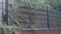 FLOP: strak hekwerk met bamboemat aan de ene kant en wat klimop aan de andere kant