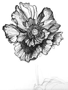 black and white poppy tattoo - Google Search