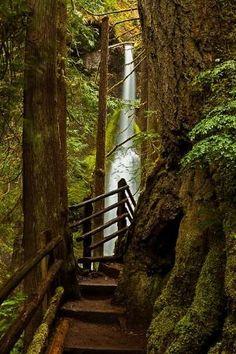 Maremeyer Falls, Olympic National Park, Washington by sylvia alvarez
