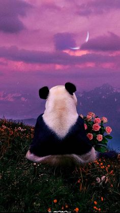 Wild Animal Wallpaper, Cute Panda Wallpaper, Cute Panda Baby, Panda Love, Panda Wallpapers, Cute Wallpapers, Baby Animals Pictures, Cute Baby Animals, Beautiful Creatures