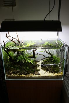 Tiny jungle themed planted aquarium