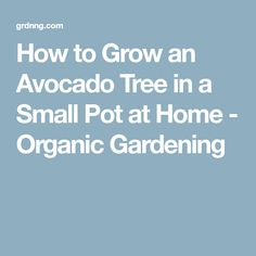 How to Grow an Avocado Tree in a Small Pot at Home - Organic Gardening