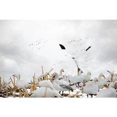 Hypnotizer Snow Goose Flag #rigemright #heavilyseasoned #duckhunting #waterfowl