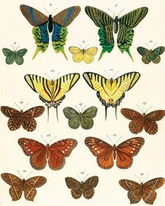 etsy shop Belle Botanica, a treasure trove of vintage and antique inspired botanical art prints,