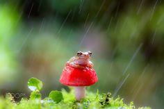 Do you know 'to enjoy the autumn rain' by cocotiamo. @go4fotos