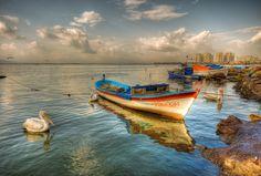Pelican time (Izmir Turkey) by Nejdet Duzen, via 500px