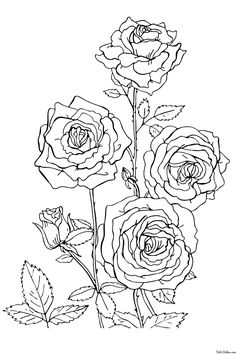 coloring the Rose