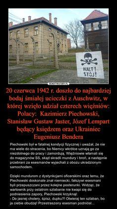 20 czerwca 1942 r. doszło do najbardziej bodaj śmiałej ucieczki z Auschwitz, w której wzięło udział czterech więźniów: Polacy: Kazimierz Piechowski, Stanisław Gustaw Jaster, Józef Lempart będący księdzem oraz Ukrainiec Eugeniusz Bendera – Piechowski był w fatalnej kondycji fizycznej i uważał, że nie ma wiele do stracenia, bo Niemcy wkrótce uznają go za niezdolnego do pracy i zamordują. Więźniowie włamali się do magazynów SS, skąd skradli mundury i broń, a następnie przebrani za esesmanów wyjecha Learn A New Language, History Memes, Wtf Funny, Poland, Everything, Haha, Life Hacks, Politics, Education