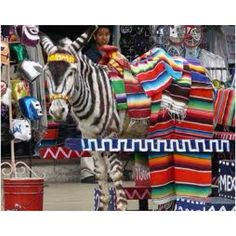 Tijuana, Mexico, donkeys painted as zebras: we have a family photo with one!