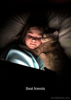 Funny-Cats-Photos-Snapchats
