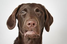 Photographer captures quirky portraits of dogs up for adoption