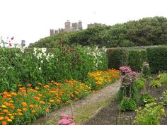 Castle of Mey Gardens.  The Queen Mother's own castle.