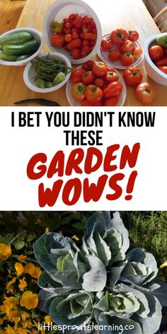 The garden is a glorious place full of mystery and knowledge. There is so much to learn. I am always learning new garden wows that blow my mind! I bet you didn't know these amazing garden wow facts. (or maybe not all of them)