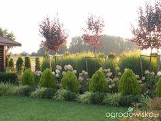 Some hillside landscaping tips - Gardening Site Side Yard Landscaping, Privacy Landscaping, Backyard Garden Landscape, Garden Yard Ideas, Garden Landscape Design, Garden Fencing, Landscaping Tips, Boxwood Garden, Bush Garden