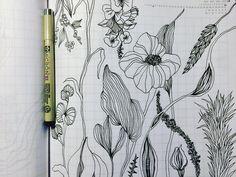 Реальные цветочки переплетаются с фантастическими. Хотя благодаря интернету все мы можем наблюдать совершенно невероятные экземпляры природы.  #sketching #sketch #drawing #botany #pencildrawing #scetchoftheday #scetchbook #artline #flowers #pen #artwork #artdesign #fantastic #micronpen #illustration #botanicalflowers #artist #instaart #elislisart #artshering #скетч #скетчбук #скетчинг #набросок #скетчбукручнойработы #скетчдня #doodle #zentangle