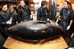 Jan. 5, 2011 -- A monster bluefin tuna sold for a record $396,000 in the year's first auction at the world's biggest fish market in Tokyo Wednesday amid intense pre-dawn bidding.    The 342-kilogram (752-pound) fish -- caught off Japan's northern island of Hokkaido -- fetched a winning bid of 32.49 million yen ($396,000), said an official at the Tsukiji fish market.