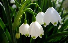 100 Types of the Most Beautiful White Flowers for Your Garden - Home and Gardens Types Of White Flowers, My Flower, Beautiful Flowers, Flower Colour, Elegant Flowers, White Roses, Flower Images, Flower Photos, Flowers Pics