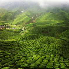 More tea country, Cameron Highlands: Malaysia Travel, Asia Travel, Malaysia Trip, Places To Travel, Places To See, Travel Destinations, Places Around The World, Around The Worlds, Beautiful World