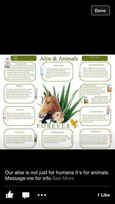 Aloe & Animals