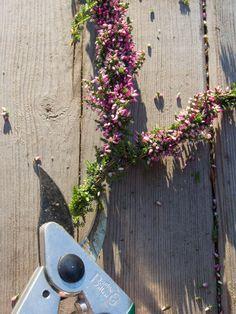 Lag et nydelig lynghjerte! Garden, Diy, Autumn, Garten, Bricolage, Fall Season, Lawn And Garden, Gardens, Do It Yourself