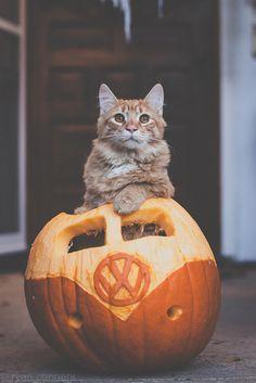 Rosie in a VW Pumpkin.