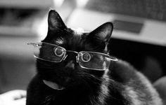 - Cute Cats Wearing Glasses  <3 <3