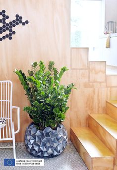 Option for upstairs mezzanine or living room: ZZ Plant
