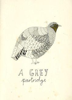 A grey Partridge.