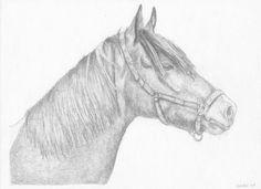 paarden tekeningen - Google zoeken