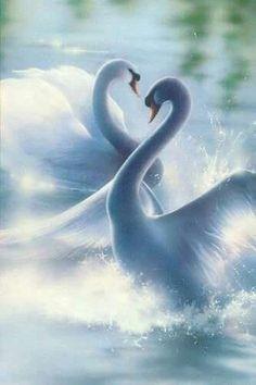 I love swans! :-D