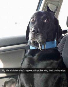Este perro, que nunca debió, haber llegado en el carro con Gina. | 29 Perros que cometieron grandes errores