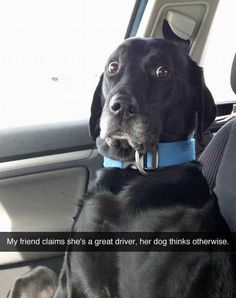 This dog who clearly does not trust the driver of this car.   31 Things That Are Way More Important Than Studying For Finals Right Now