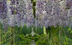 Garden with wisteria   Dominique Lafourcade jardins