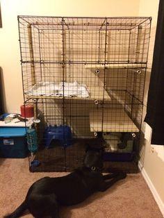 Just made my new rabbit condo! Pet Stuff, Totoro, Bunnies, Condo, Rabbit, Future, Pets, Bunny, Rabbits