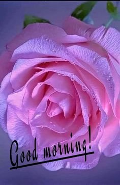 Good Morning Arabic, Good Morning All, Good Morning Messages, Morning Wish, Morning Quotes, Beautiful Morning Pictures, Beautiful Nature Pictures, Beautiful Flowers, Happy Weekend Quotes