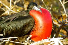 Gaining an Appreciation of Birding in the Galapagos