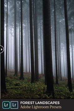 Spring Forest, Autumn Forest, Dark Autumn, Forest Photography, Forest Landscape, Lush Green, Landscape Photos, Lightroom Presets, Adobe