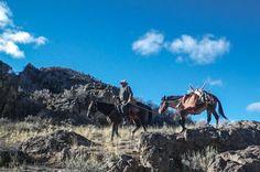 Saddles For Sale, Horse Camp, Mini Farm, Horse Saddles, Leather Mules, Donkeys, Western Art, Old West, Horse Stuff