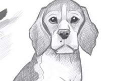 How to Draw a Beagle Puppy - Video Lessons of Drawing & Painting